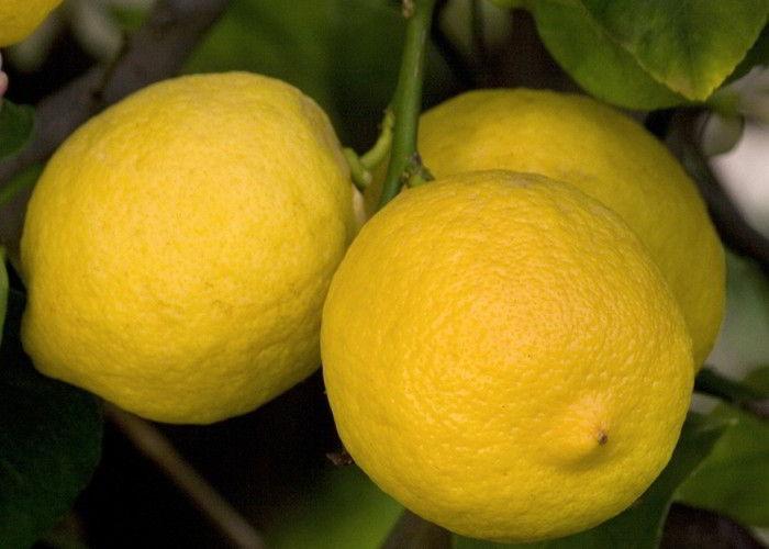 Usare il limone per pulire il bagno naturalmente e bene